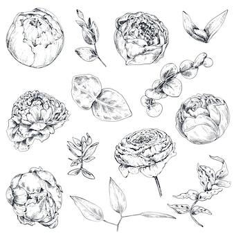 Raccolta di fiori e piante disegnati a mano. illustrazioni monocromatiche in stile schizzo