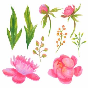 Raccolta di fiori rosa dell'acquerello
