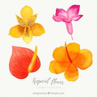 Raccolta di fiori tropicali in stile acquerello