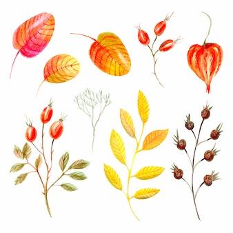 Raccolta di foglie e bacche autunnali