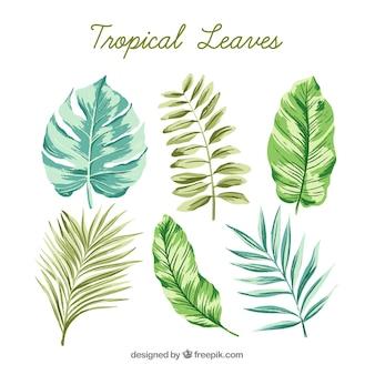 Raccolta di foglie tropicali acquerello classico