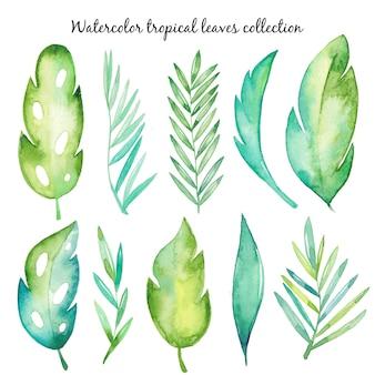 Raccolta di foglie tropicali dell'acquerello