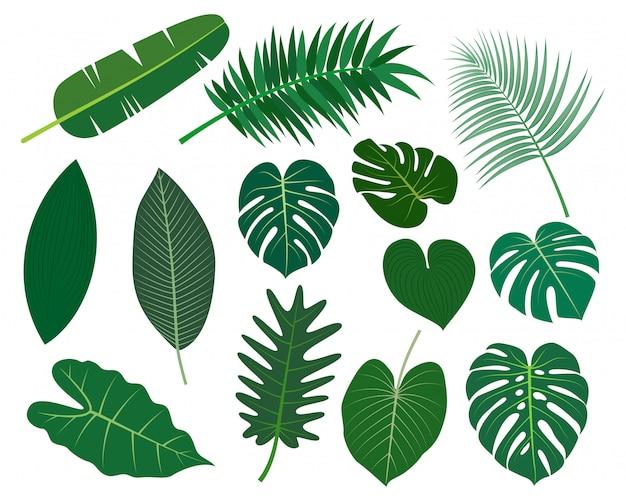 Raccolta di foglie tropicali insieme vettoriale