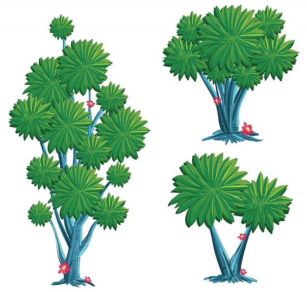Raccolta di illustrazione dell'albero