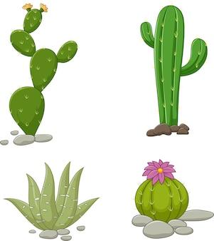 Raccolta di illustrazione di cactus