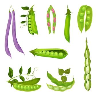 Raccolta di immagini diverse di baccelli e fagioli. illustrazione su sfondo bianco.