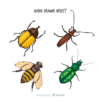 Raccolta di insetti disegnata a mano