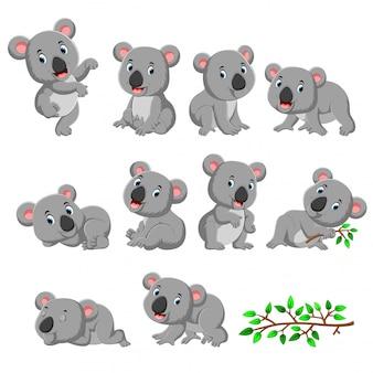 Raccolta di koala felice con varie pose