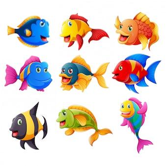 Raccolta di pesce