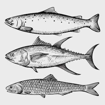 Raccolta di pesci tonno, salmone, sardina con incisione