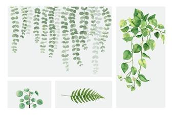 Raccolta di piante disegnate a mano isolato su sfondo bianco