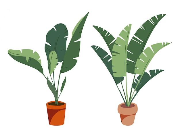Raccolta di piante tropicali da interno in vaso. piante decorative e decidue domestiche in uno stile piano disegnato scandinavo a mano. elementi isolati su sfondo bianco