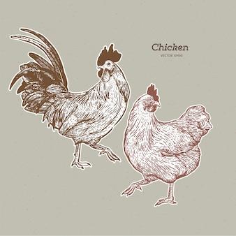 Raccolta di pollo