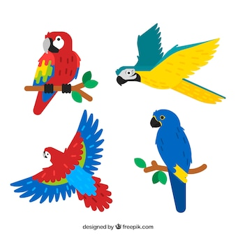 Raccolta di quattro uccelli tropicali