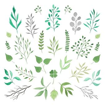 Raccolta di rami di acquerello verde