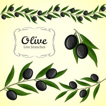 Raccolta di rami di ulivo, logo di olive nere