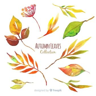 Raccolta di stile dell'acquerello delle foglie di autunno