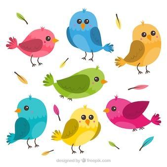 Raccolta di uccelli piatto