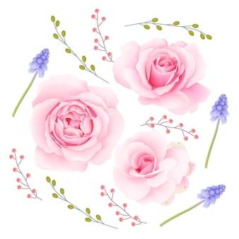 Raccolta di vettore di rose rosa
