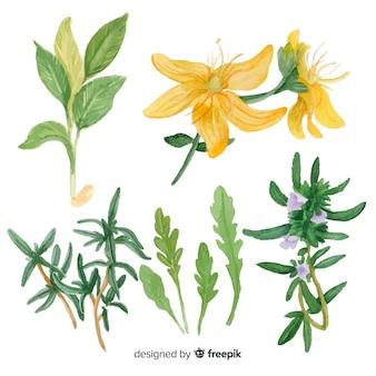 Raccolta disegnata a mano realistica di schizzi di erbe e spezie