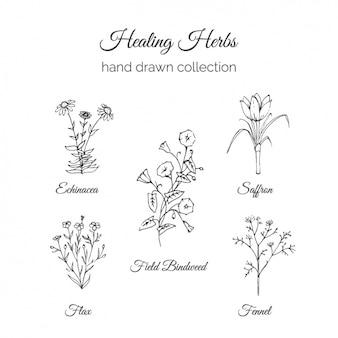Raccolta fiori disegnati a mano