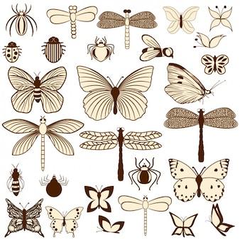 Raccolta insetti