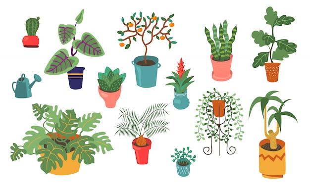 Raccolta piana di vettore di varie piante domestiche