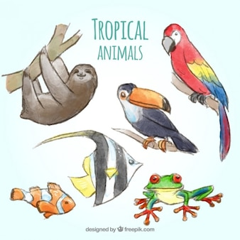 Raccolta tropicali animali acquerello