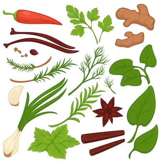 Raccolta variopinta delle piante e delle erbe su bianco.