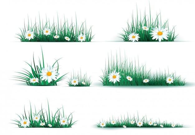 Radura verde nell'erba della foresta. camomille sulla radura.