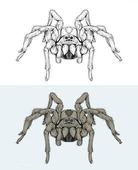 Ragni che camminano in mano disegno