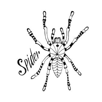 Ragno nello stile di zentangle. disegnato a mano disegnato a mano doodle schizzo per tatuaggio, stampa