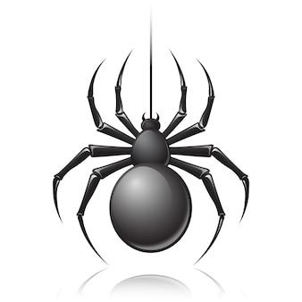 Ragno nero