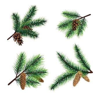 Rami dell'albero di natale del ramo dell'abete con i coni