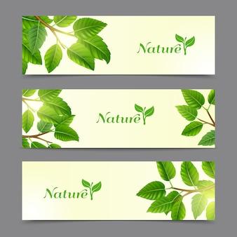 Rami di alberi con set di banner di foglie verdi