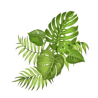 Rami tropicali della palma su bianco