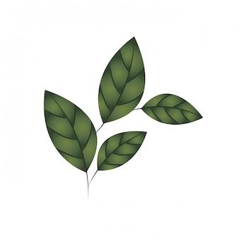 Ramo con foglie icona isolata