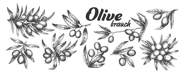 Ramo d'olivo