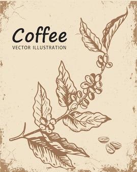 Ramo di un albero di caffè