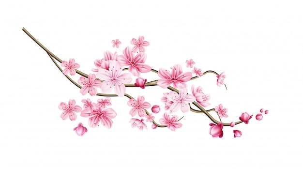 Ramoscello realistico di albero di sakura di vettore con il petalo rosa