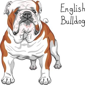 Razza di bulldog inglese cane schizzo