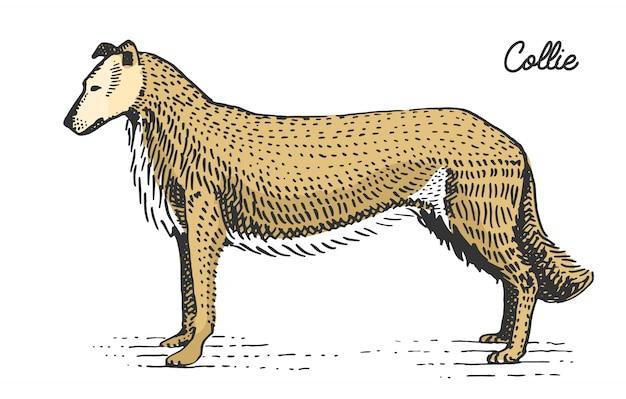 Razza di cane incisa, illustrazione disegnata a mano in stile scratchboard xilografia, specie vintage.