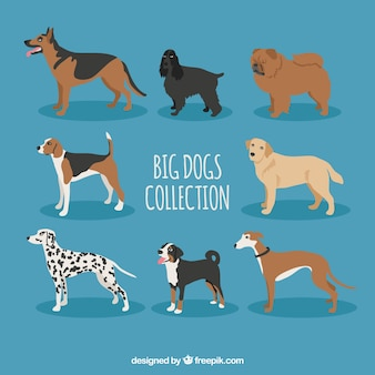 Razze di cani grande collezione