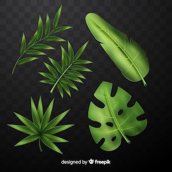 Realistica collezione di foglie tropicali