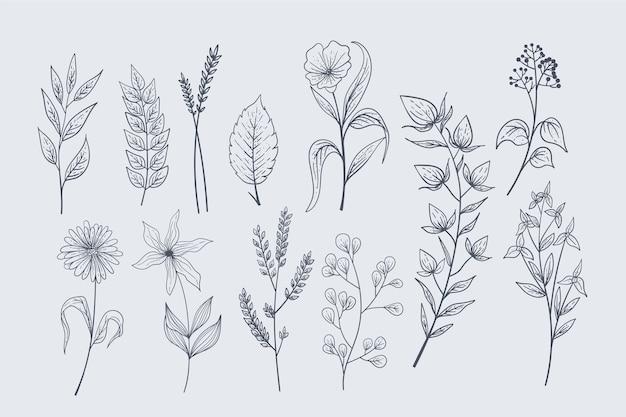 Realistiche erbe disegnate a mano e fiori selvatici