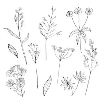 Realistici fiori disegnati a mano