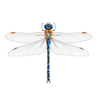 Realistico libellula isolato