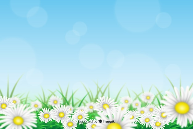 Realistico sfondo fiori margherita