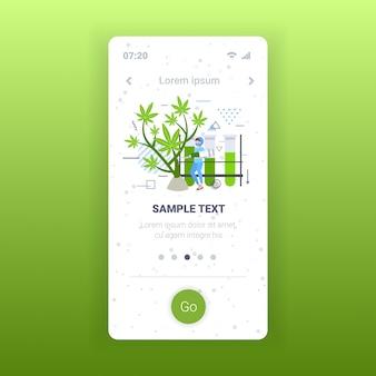 Ricercatore di sesso femminile utilizzando la siringa per esaminare la pianta medica di marijuana farmacia concetto di cannabis medica smartphone schermo mobile app piena lunghezza spazio copia