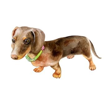Ritratto del bassotto del cane dell'acquerello - animali domestici dipinti a mano